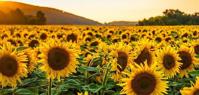 Bunge Romania – Oilseeds